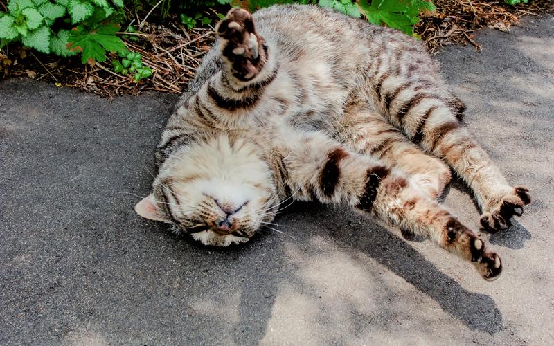熱帯夜の暑さ対策!ぐっすりと快適に眠る方法